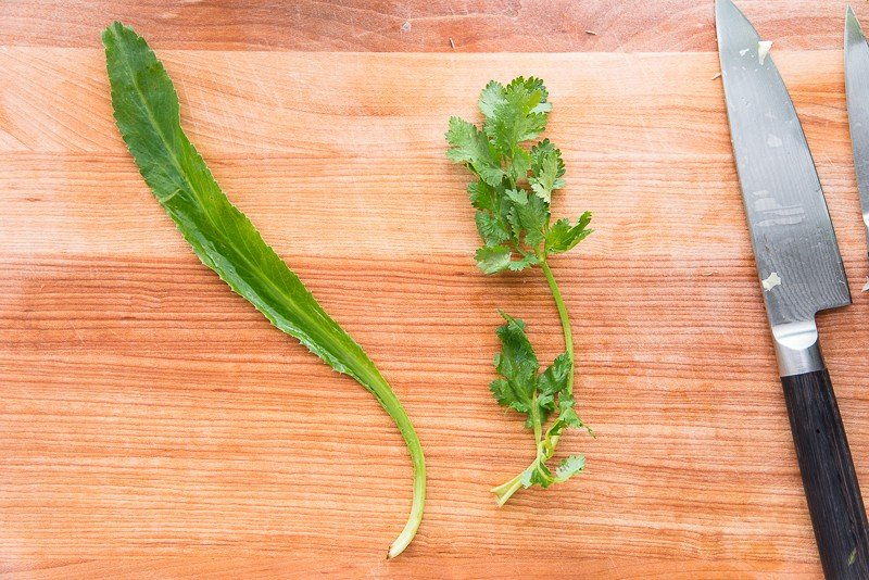An image shows the difference between culantro and cilantro.